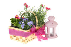 Basket garden flowers Stock Photography
