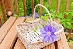 Basket for garden flowers Royalty Free Stock Image