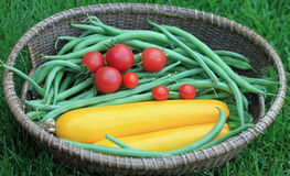 Basket of Garden Fresh Zucchini, Green Beans, and Tomatoes Stock Image