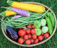 Basket of Garden Vegetables. Including zucchini, eggplant, green beans, tomatoes, peppers and tomatillos Stock Photos