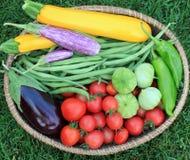 Basket of Garden Vegetables Stock Photos