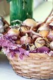 Basket of Garlic Royalty Free Stock Photography