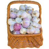 Basket with garlic. Royalty Free Stock Photography