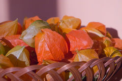 Basket of gooseberry Stock Photography