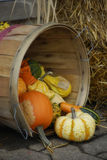 Basket of Gourds. A woven basket on its side with gourds and a pumpkin spilling out stock image