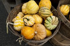 Basket of gourds Stock Photography