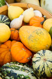 Basket of gourds Royalty Free Stock Photos