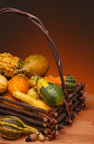 Basket of Gourds. A basket made of twigs fullof an assortment of gourds. Vertical format on a light ot dark warm background royalty free stock photography