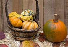 Basket of Gourds and Pumpkin Stock Photo