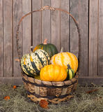 Basket of Gourds Stock Images