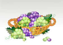 Basket with grapes Royalty Free Stock Photography