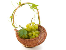 Basket with grapes Stock Photo