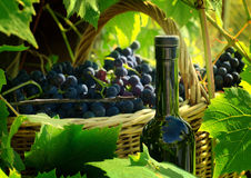 Basket with grapes and a bottle Stock Image
