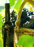 Basket with grapes and a bottle Stock Photos