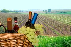 Basket with grapes and wine. Against a vineyard Stock Photo
