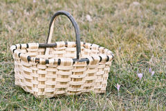 Basket on the Grass. Empty wooden basket on the grass Royalty Free Stock Photos