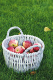 Basket on the grass Royalty Free Stock Image