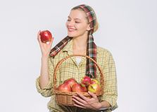 Basket of green apples. spring harvest. summer fruit. organic and vegetarian. healthy teeth. orchard, gardener girl with stock photography