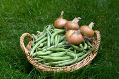 Basket of green beans and onions Royalty Free Stock Photography