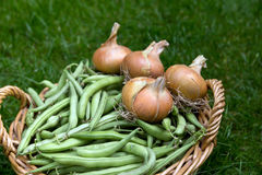 Basket of green beans and onions Stock Photos