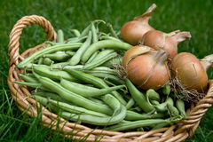 Basket of green beans and onions Royalty Free Stock Image