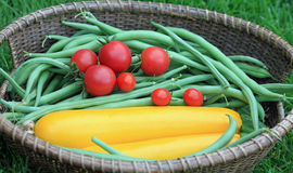 Basket of Green Beans, Yellow Zucchini and Red Tomatoes Stock Photo