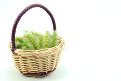 Basket with green foxtail. I have expressed the atmosphere of early autumn, with a basket of green fox-tail Royalty Free Stock Photos