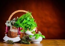 Basket Green Fresh Herbs Royalty Free Stock Images