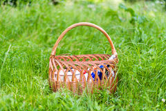 Basket in green grass Stock Image