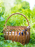 Basket in green grass Stock Images