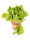 Basket with green lettuce salad Stock Photos