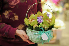 Basket with green orchid flowers. In hands stock photo