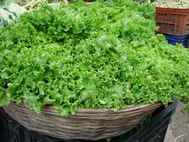 Basket with a green salad. On the market Royalty Free Stock Photos