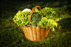 Basket of green vegetables over nature background Stock Photos