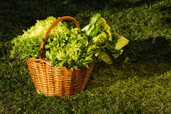 Basket of green vegetables over nature background Royalty Free Stock Images