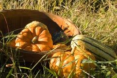 Basket of grouds Stock Photos