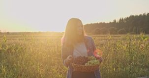 Basket with harvest of blue and green grapes in hands of young girl stock video