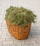 Basket with hay Royalty Free Stock Photos