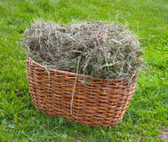 Basket with hay armful Stock Photos