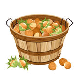 Basket with hazelnuts. Stock Image