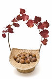 A basket with hazelnuts and ivy. Royalty Free Stock Image