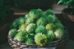 Basket with heap of ripe green Cucúmis angúria. Wattled basket with heap of ripe green Cucúmis angúria; shallow depth of field; dark settings Royalty Free Stock Photography