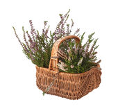 Basket with heather on white background Stock Photo