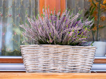 Basket of Heather Stock Images