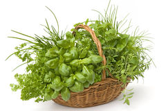 Basket of herbs Stock Images