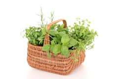 Basket of herbs Royalty Free Stock Images