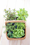 Basket of herbs Stock Image
