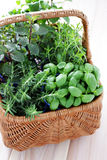 Basket of herbs Royalty Free Stock Photography