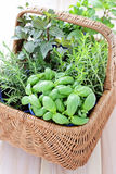 Basket of herbs Royalty Free Stock Photos