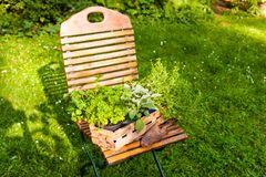Basket with herbs in a garden Royalty Free Stock Images